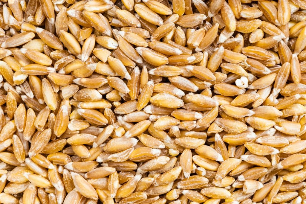 background - Emmer farro hulled wheat grains