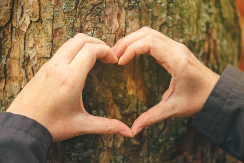 Mains féminines faisant un signe de cœur sur un tronc d'arbre, concept d'écologie